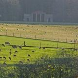 Deer in the grounds at Sledmere